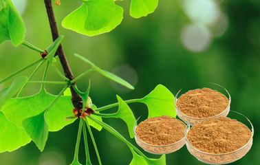 Pure Ginkgo Herbal Extracts For Cerebral And Microcirculation Improvement