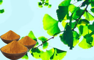 ChP2015 Ginkgo Biloba Standardized Extract Bright Yellow Brown Powder